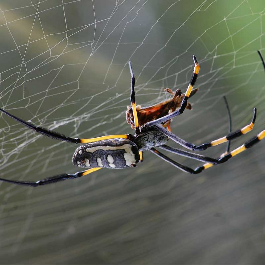 Do You Keep Seeing Spiders in Your House?